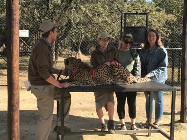 just casually petting a cheetah